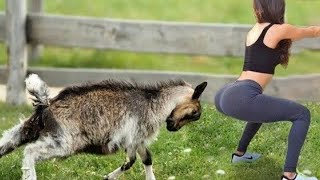 TRY NOT TO LAUGH 🐶😺🐟🐴🐐Funniest Animals Scared People Reaction of 2020 Weekly