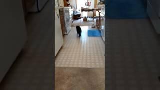 Fetch with Zazzles