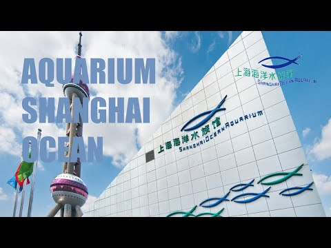 SHANGHAI OCEAN AQUARIUM - the most beautiful aquariums in the world