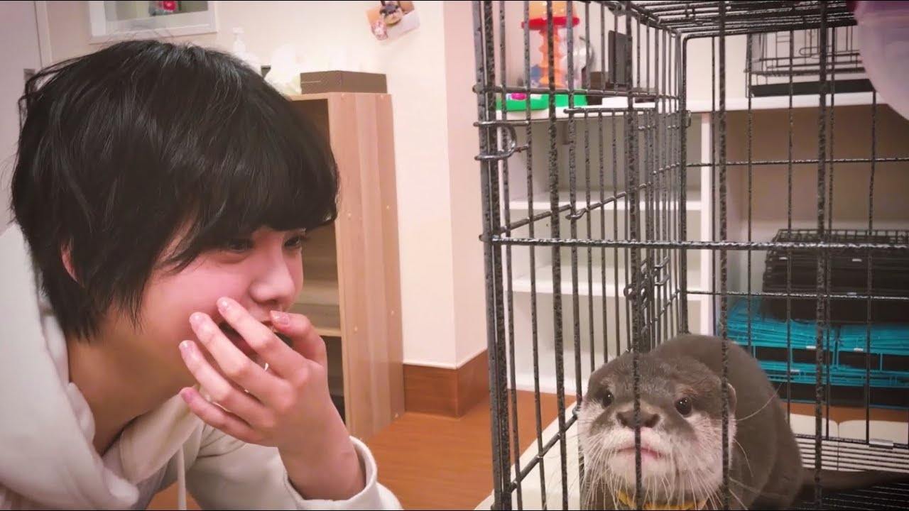 カワウソと平手友梨奈