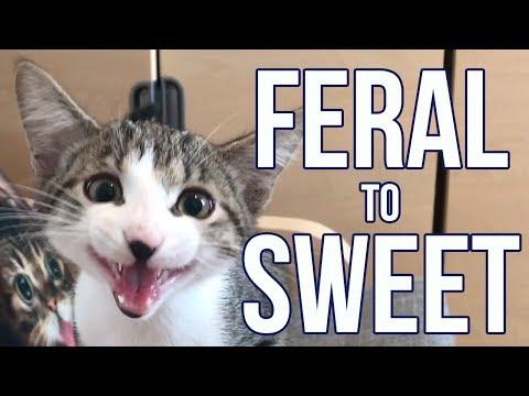 Feral Kitten Becomes a Needy Sweetie!