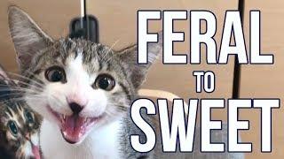 feral-kitten-becomes-a-needy-sweetie