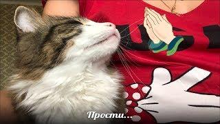 Мишки кота с нами больше нет... ВЛОГ 417