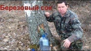 видео Как консервировать берёзовый сок на зиму