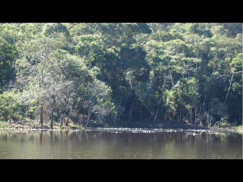Restauração Florestal - Preservação Permanente