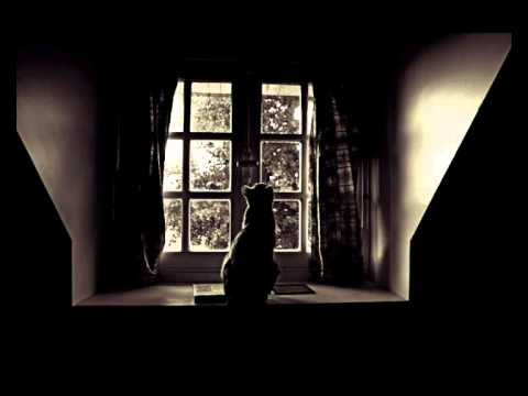 Kot W Pustym Mieszkaniu Wisława Szymborska Youtube