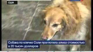 В Нью-Йорке собака ювелира проглотила бриллиант стоимостью 20 тыс. долларов