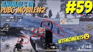 PUBG MOBILE || MOMENT FUNNY & EPIC #59 || EPIC CHICKEN, ANIMALS#2 & FAILS MOMENT