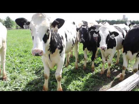 Dairy Farm Sustainability Award winner, Clovermead Farms