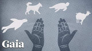 Synchronicity Or Animal Guardians?