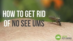 How to Get Rid of No See Ums