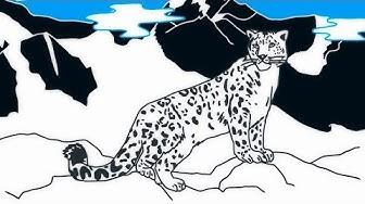 Lumileopardi, lumisten vuorten kissaeläin