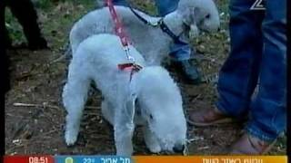 "Another appearance on Israel TV Channel 2 on Morning Show ""Yom Chadash"" with Gidi Gov - 24/1/2007"