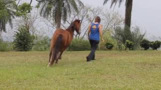 Avinu Malkeinu - Horse Dance Saint Vincent and the Grenadines