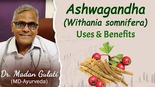 Withania somnifera -Ashwagandha uses and benefits- Planet Ayurveda- Dr. Madan Gulati