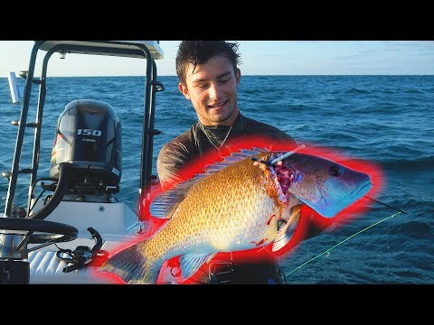 Spearfishing GIANT Mangrove Snapper Free Diving Gulf Of Mexico
