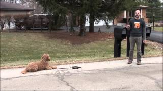 Advancing Your Obedience.  Suburban K9 Dog Training.