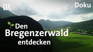 Urlaub und Wandern im unbekannten Bregenzerwald  Cheese-Trail  Architektur  Freizeit  Doku  BR