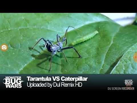 Клоп хищнец против гусениц