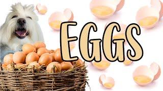 Dogs can eat EGGS? Allergies? Recipes, Coton de tulear I Lorentix