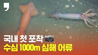 국내 첫 포착! 수심 1000m에서 포착된 심해어류는?