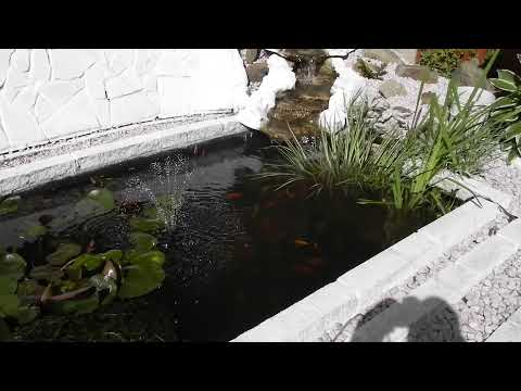 MY OLD FISH POND AND WATERFALL