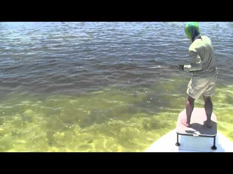 how to catch minnows on a hook