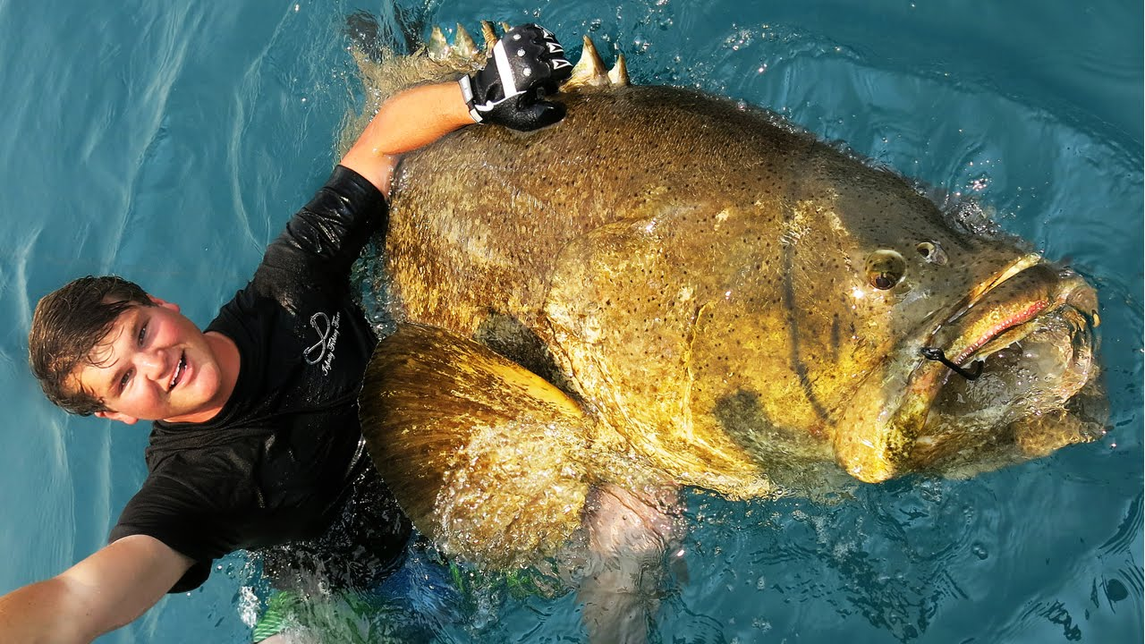 Extreme goliath grouper fishing youtube for Goliath grouper fish