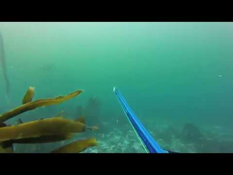 Bronze Whaler VS Shark Shield