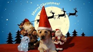 Xmas, Labrador Luna Merry Christmas