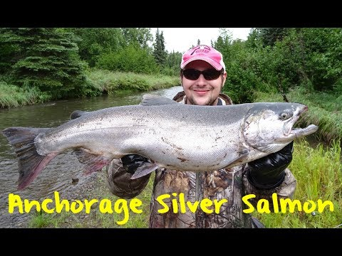 Anchorage Silver Salmon Fishing