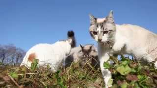 かご猫Blog http://kagonekoshiro.blog86.fc2.com/ http://kagonekoshiro.blog86.fc2.com/blog-entry-9638.html.