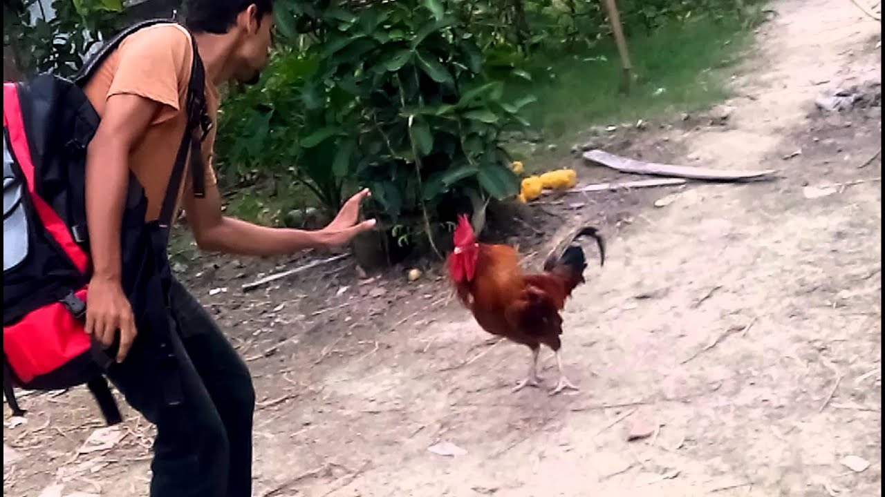 Cock Fight Man Man - Xxx Pics-8896