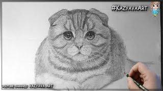 Как нарисовать Шотландскую вислоухую кошку карандашом. Мастер-класс. Часть 1