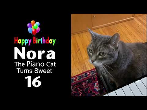 Nora The Piano Cat - Turns 16 Years Old