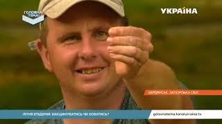 Які засоби найкраще захищають від комах   Головна тема
