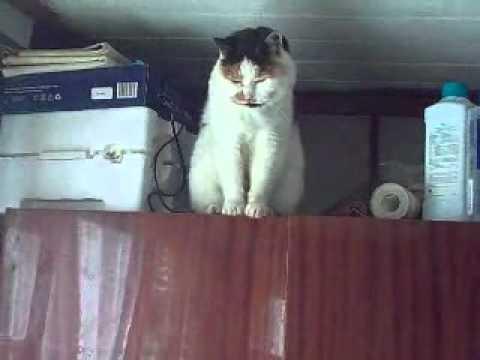 видео: Лучший в мире кот! Памяти друга...