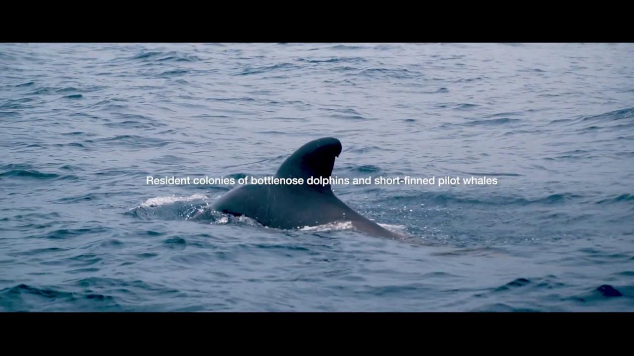 Carta de sostenibilidad en el avistamiento de cetáceos