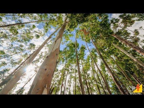 Clique e veja o vídeo  Curso Cultivo de Eucalipto - Aquisição de Mudas - Cursos CPT