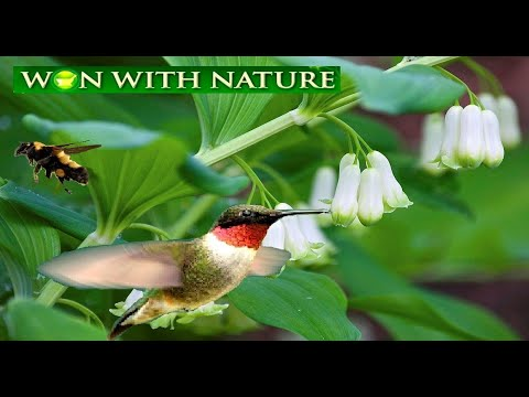 Won With Nature