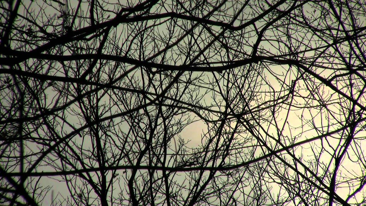 Emerald Ash Borer | EAB Infested Trees