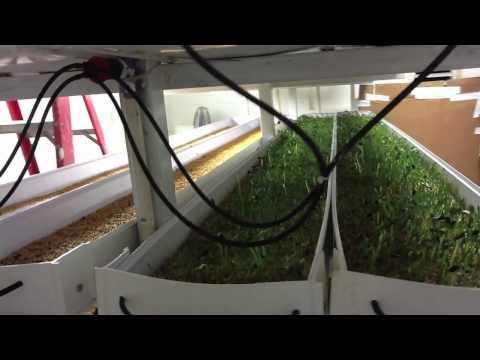 Sunnyside Farms - Hydroponic Fodder System