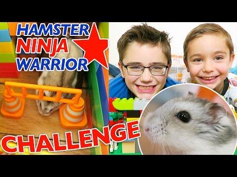 HAMSTER NINJA WARRIOR CHALLENGE - Parcours d'obstacles en Lego pour Nuts 😂
