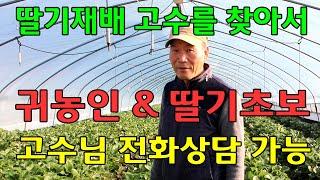 딸기재배방법, 딸기농사 고수를 찾아서,  경남 거창군 …