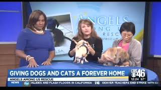 Angels Among Us with Misty Lou & Leang on CBS 46