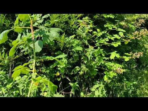 Overgrown Garden Project.