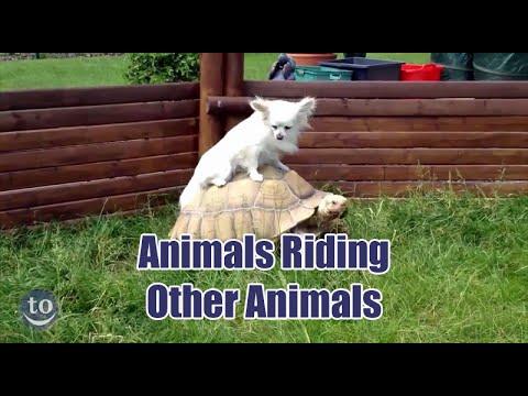 Animals Riding Other Animals
