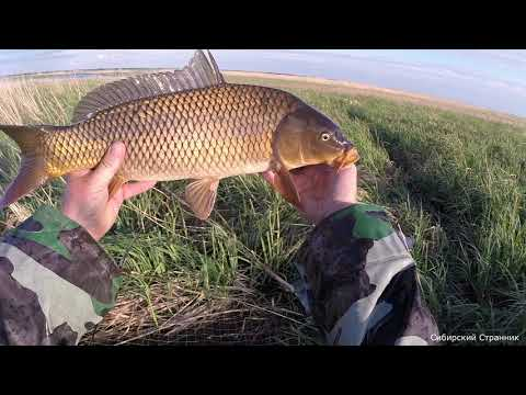 видео: Караси и сазаны в болоте. Рыбалка на паук. Рыбалка на подъёмник.