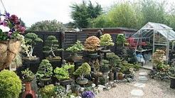 Building A Bonsai Garden