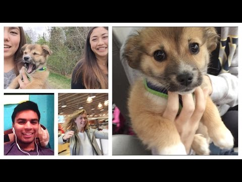 DONE WITH SCHOOL, going to Alaska!, cutest puppy ever, what I eat,  crazy invention | Weekly Vlog